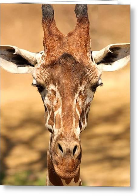 Greeting Card featuring the photograph Giraffe by Elizabeth Budd