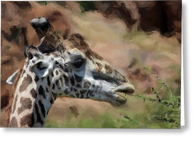Giraffe Feeding Greeting Card by Daniel Hagerman