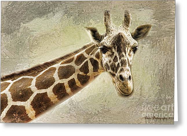 Giraffe Greeting Card by Linda Blair