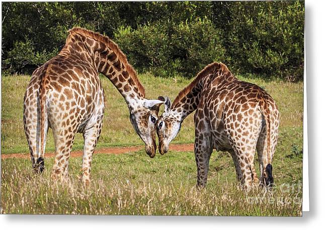 Giraffe Love Greeting Card