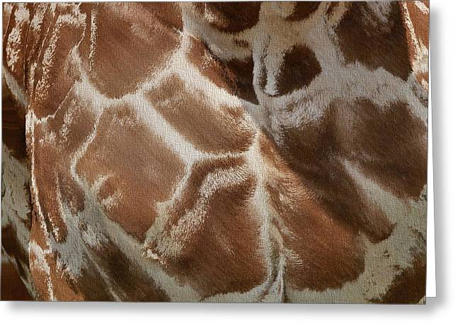Giraffe Patterns Greeting Card by Dan Sproul