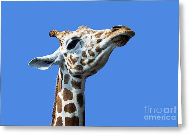 Giraffe Pride Greeting Card by John Greim