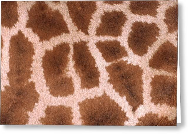 Giraffe Skin Greeting Card