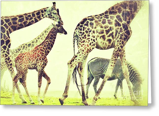 Giraffes And A Zebra In The Mist Greeting Card