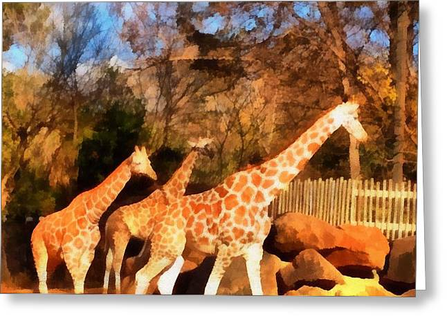 Giraffes At The Zoo Greeting Card by Dan Sproul