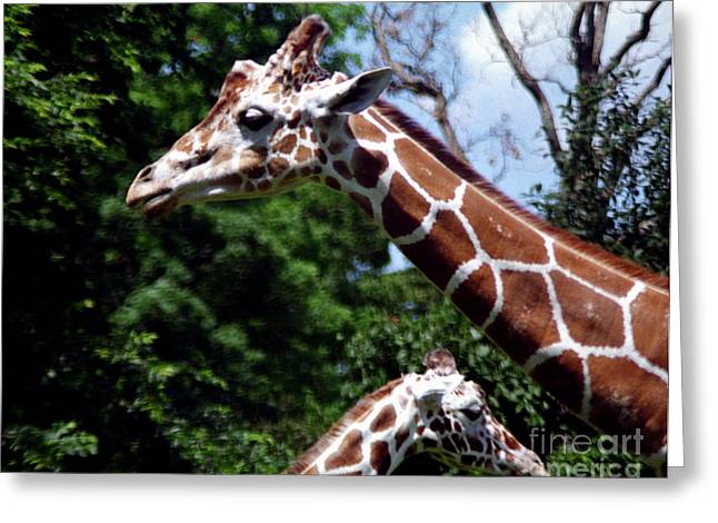 Greeting Card featuring the photograph Giraffes Coming And Going by Tom Brickhouse