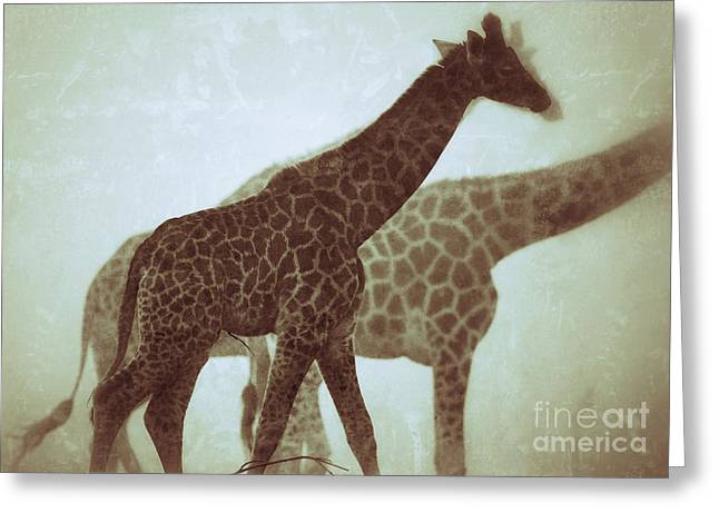 Giraffes In The Mist Greeting Card by Nick  Biemans