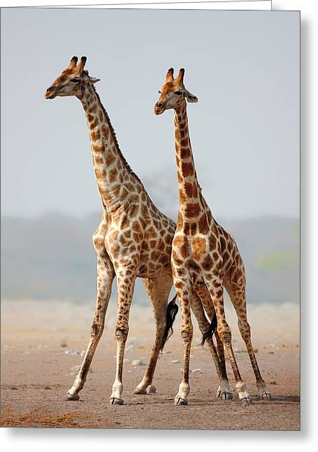 Giraffes Standing Together Greeting Card