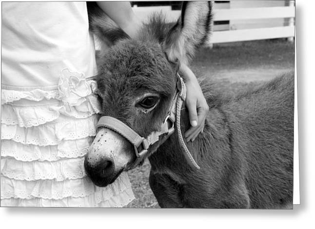 Girl And Baby Donkey Greeting Card
