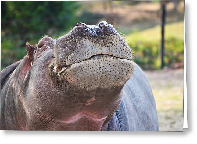 Greeting Card featuring the photograph Give Me A Kiss Hippo by Eti Reid