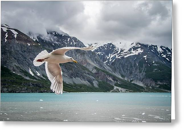 Glacier Bay Flyby Greeting Card by Randy Turnbow
