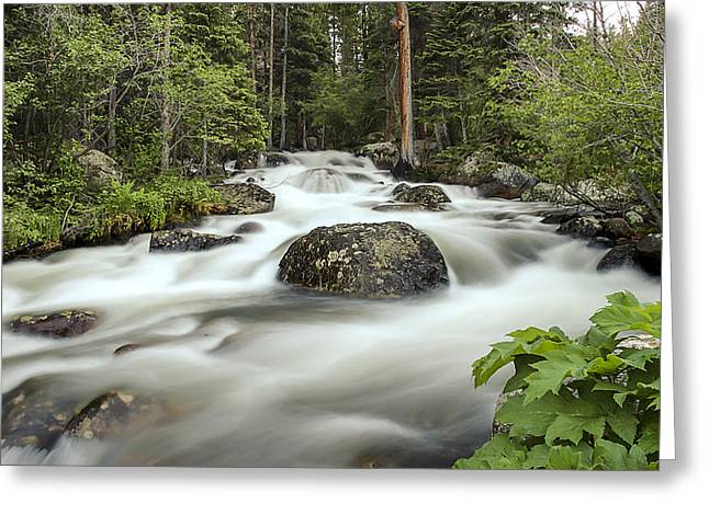 Glacier Creek Greeting Card