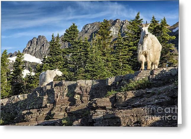 Glacier Goats Greeting Card