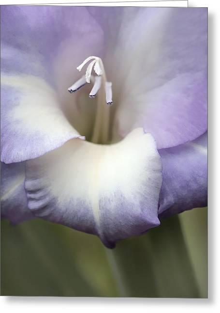 Gladiola Flower Lavender  Greeting Card