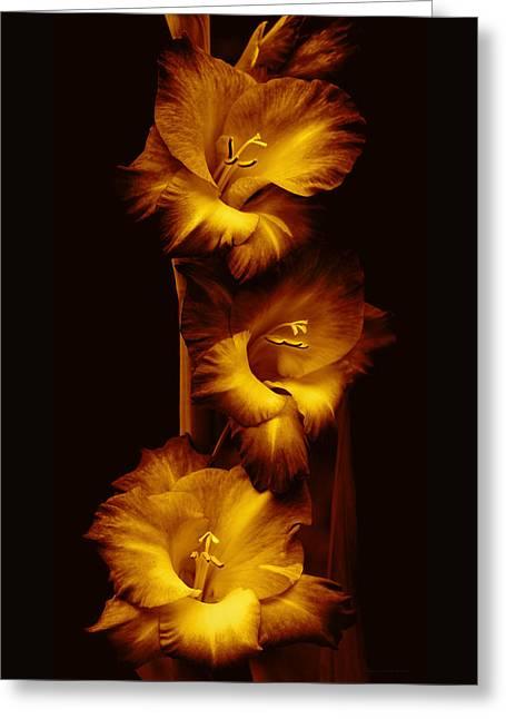 Gladiola Flowers Evening Golden Light  Greeting Card