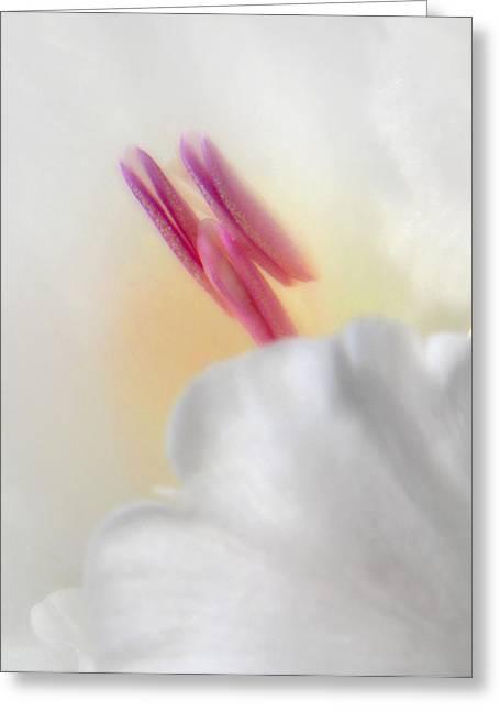 Gladiolus Closeup Greeting Card