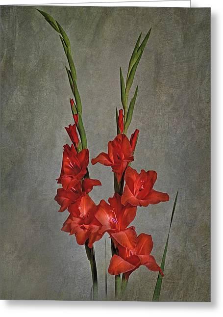 Gladiolus I Greeting Card