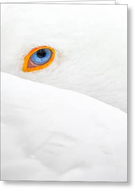 Glance Greeting Card by Jean-luc Besson