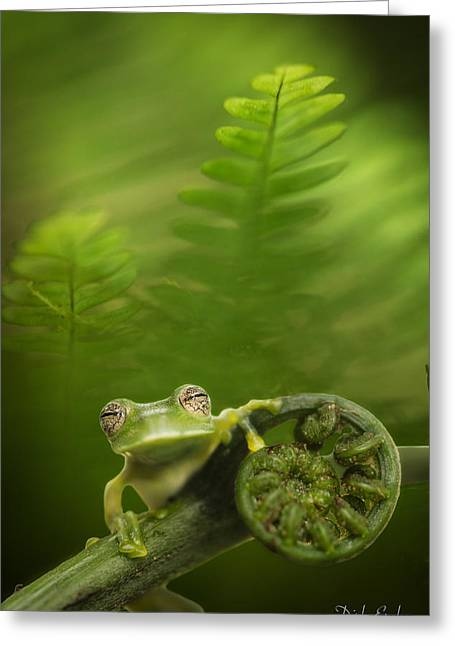 Glass Frog In Amazon Rain Forest Greeting Card