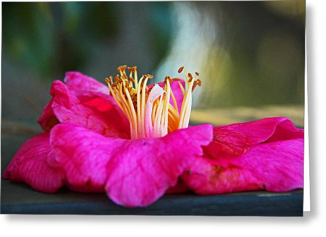 Greeting Card featuring the photograph Glencairn Garden 020 by Andy Lawless