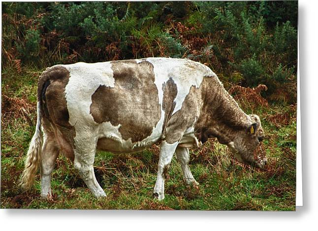 Glendalough Cattle 1 Greeting Card