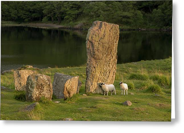 Glengarriff, Ireland, Uragh Stone Circle Greeting Card by Tom Norring