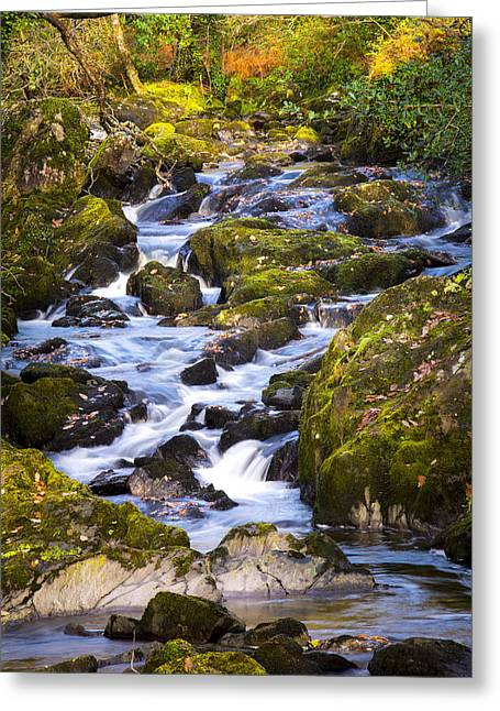 Glengarriff Woods In Autumn Greeting Card