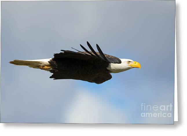Glide Greeting Card by Mike Dawson