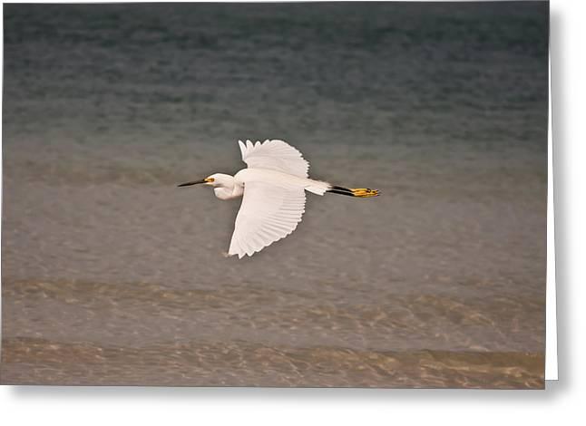 Gliding Bird Greeting Card by Paulina Szajek