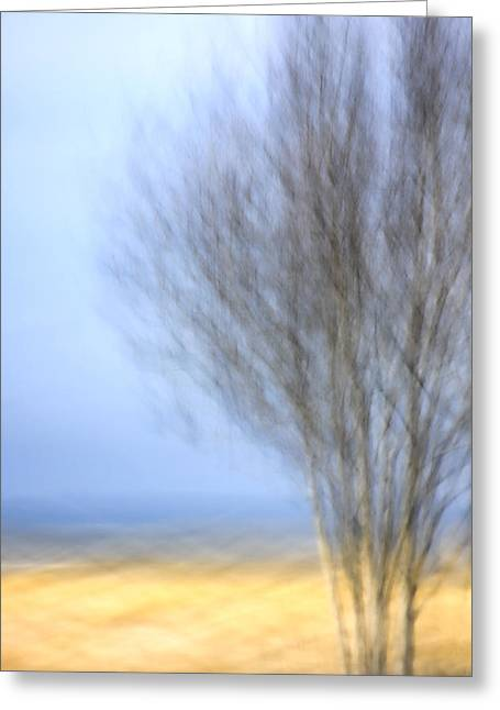 Glimpse Of Trees Sand And Beach Greeting Card by Carol Leigh