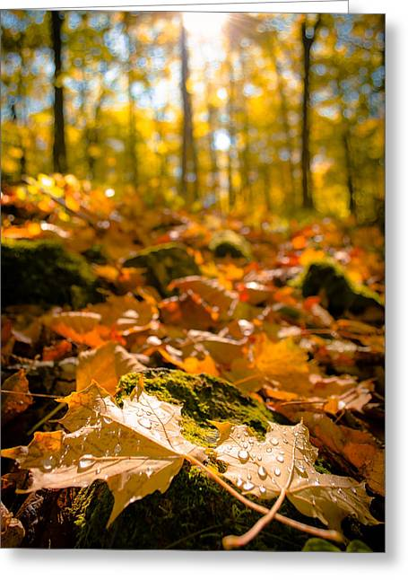 Greeting Card featuring the photograph Glistening Autumn Dew by Mark David Zahn Photography