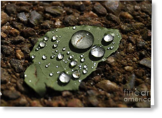 Glistening Raindrops Greeting Card