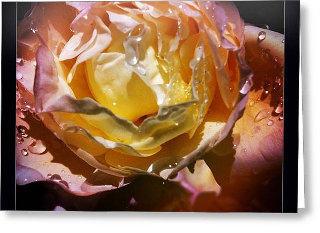 Glistening Rose Greeting Card