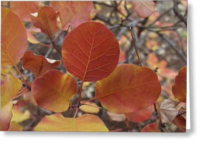 Glories Of Autumn Greeting Card by James Rishel