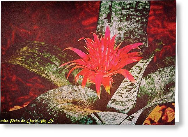 Glorious And Splendid Greeting Card by Sandra Pena de Ortiz