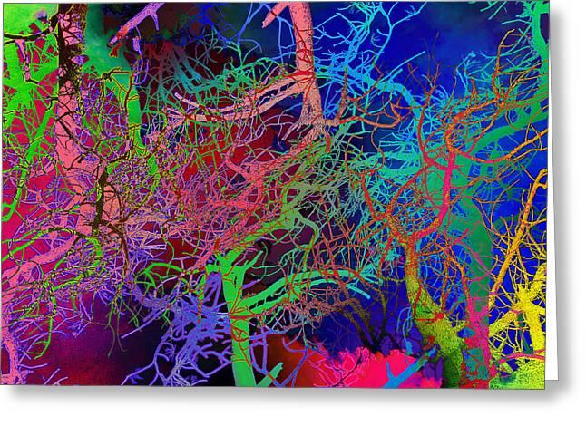 Glorious Bare Trees Greeting Card by David Pantuso