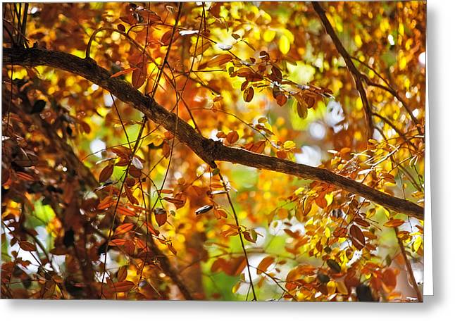 Glorious Foliage. Tree In Pamplemousse Garden. Mauritus Greeting Card