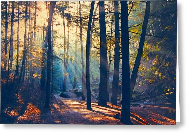 Glorious Forest Morning Greeting Card