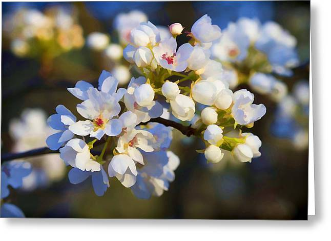 Glorious Light Greeting Card by Kathy Clark