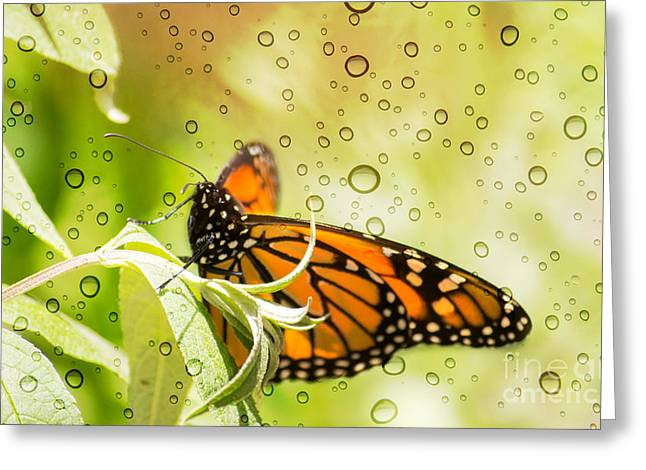 Glorious Monarch 3 Greeting Card