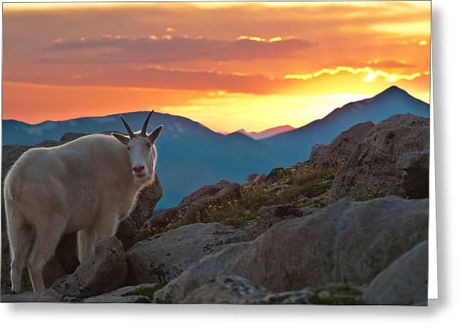 Glorious Mountain Goat Sunset Greeting Card by Mike Berenson
