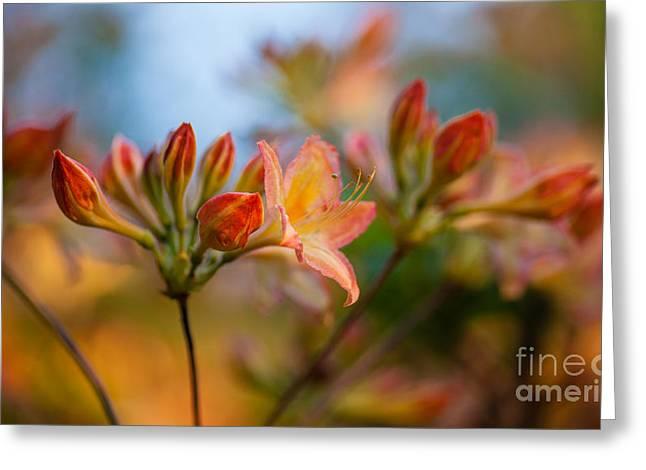 Glorious Orange Blooms Greeting Card by Mike Reid