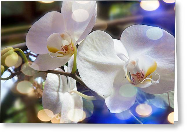 Glorious Orchids Greeting Card