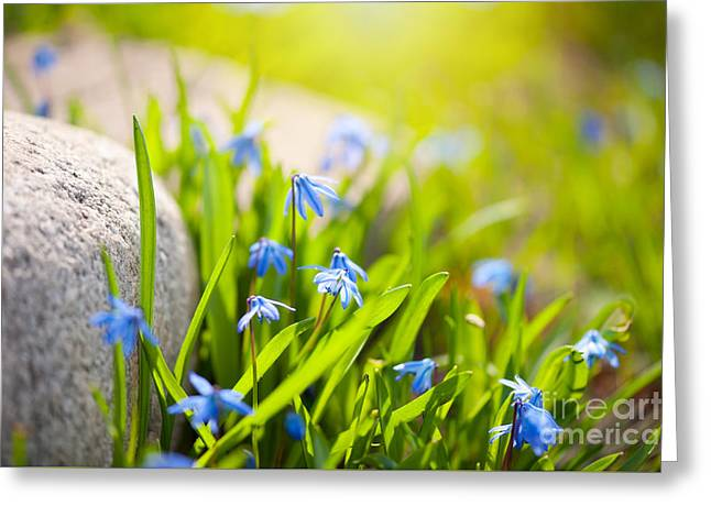Scilla Siberica Flowerets Named Wood Squill  Greeting Card by Arletta Cwalina