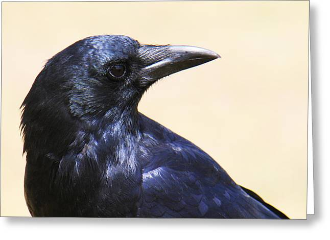 Glossy Crow Greeting Card by Bob and Jan Shriner