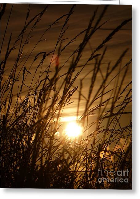 Glow Through The Grass Greeting Card