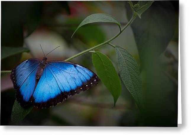 Glowing Blue Greeting Card by Penny Lisowski