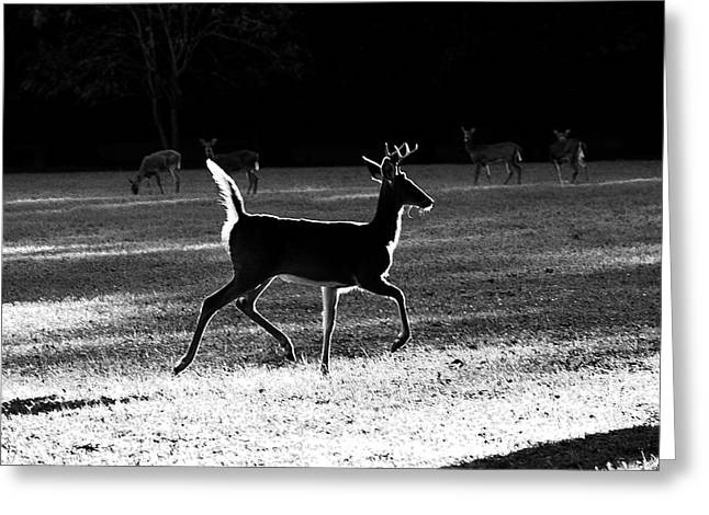 Greeting Card featuring the photograph Glowing Buck by Lorna Rogers Photography