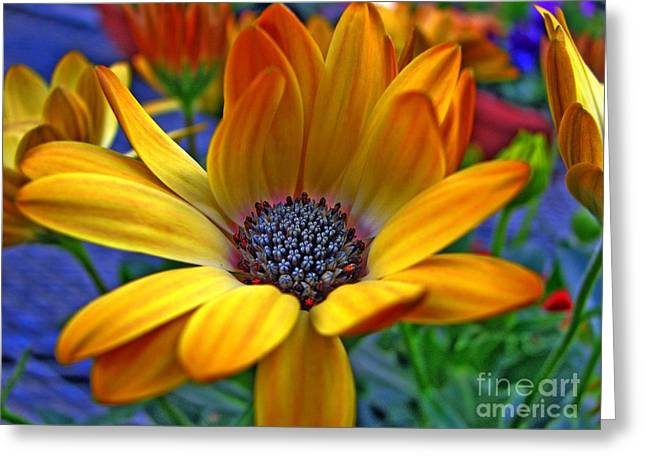 Chris Anderson Photography Greeting Cards - Glowing Greeting Card by Chris Anderson