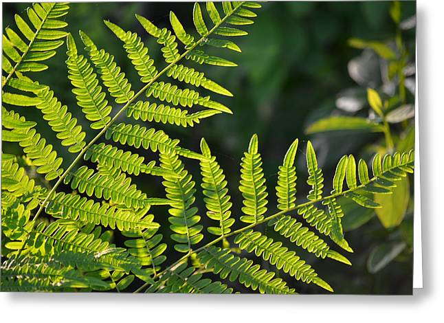 Glowing Fern Greeting Card